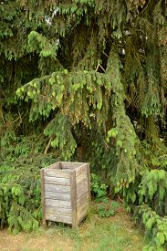 stock photo of dustbin  - Old wooden dustbin standing at pine in park - JPG