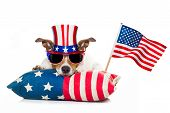 4Th Of July Independence Day Dog poster