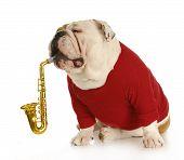 Постер, плакат: Музыкальная собака