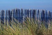 stock photo of driftwood fence  - beach fence in low light with beach grass and sea in background - JPG