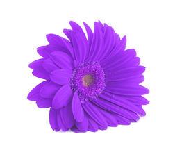 stock photo of single flower  - close - JPG