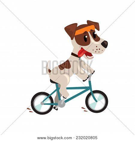 Cute Jack Russell Terrier Athlete