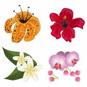 Flower Tropic Flora Vector. Hawaiian Hibiscus And Floral Exotic Lily Plumeria Aloha Plants Isolated  poster