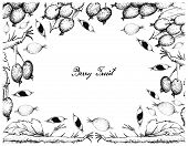 Berry Fruits, Illustration Frame Of Hand Drawn Sketch Delicious Fresh Black-berries And Black-berry  poster
