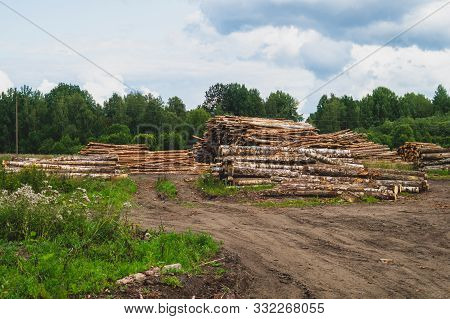 poster of Wooden Logs In The Forest. Chopped Tree Logs Stack. Nature Landscape