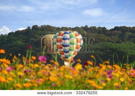 poster of Hot Air Balloon And Cosmos Field Over Bright Sky.