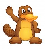 pic of platypus  - Illustration of a platypus on white  - JPG