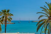 Menton France. 17 June 2019. A View Of Palm Trees In Menton In France poster
