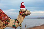 Camel In Santa Claus Hat On A Resort Beach In Egypt. Egypt Christmas Holidays Background. poster