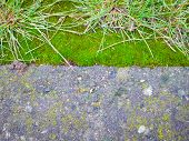 Paving Slabs Covered With Moss. Large View. Moss Rock, Paving Stones Covered With Moss, Human Vs Nat poster