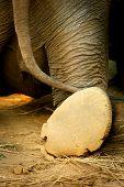 Rear View Elephant Leg Back & Tail Walk Away. Big Elephant Foot Going Away Saying Goodbye, Bye, So L poster