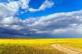 Gorgeous cumulus clouds pile up over a grassy savannah. The Horn of Africa. Travel to tropical Afric poster