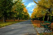 stock photo of bute  - bute park in cardiff with beautiful autumn colours of trees and bench - JPG