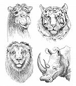 Постер, плакат: set of safari head animals black and white sketch drawing