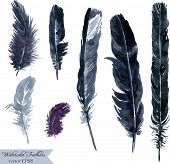 foto of feathers  - set of plumes - JPG
