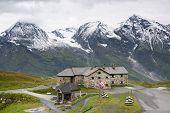pic of edelweiss  - Grossglockner High Alpine Road - JPG