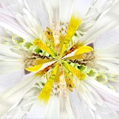 image of symmetrical  - White Flower Center Symmetric Collage Made of Collection of Various Wildflowers - JPG