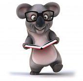 stock photo of koala  - Fun koala - JPG