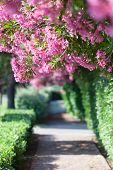 picture of tree lined street  - Trees with pink and red blossoms lining side of the road - JPG
