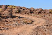 foto of dirt road  - Long Dirt Desert Road disappears into the Horizon - JPG