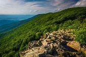 foto of virginia  - View from Crescent Rock in Shenandoah National Park Virginia - JPG