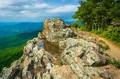 stock photo of virginia  - View of the Blue Ridge Mountains from Little Stony Man Mountain in Shenandoah National Park Virginia - JPG