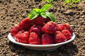 foto of strawberry plant  - juicy strawberry - JPG