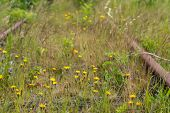 stock photo of weed  - Different types of weeds grow and flourish between the overgrown rusty rails - JPG