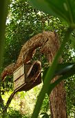 picture of nesting box  - Wooden nesting box for birds and wildlife in tree - JPG