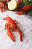 stock photo of boil  - crayfish boiled with lemon and dill on a table close up - JPG