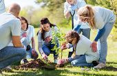 volunteering, charity, people and ecology concept - group of happy volunteers planting treel in park poster