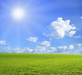 Постер, плакат: поле на фоне голубого неба