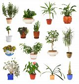 stock photo of chopin  - many different houseplants in pots isolated on white - JPG