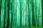 Foggy, sunny morning in summer forest. Fantasy forest. poster