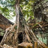Giant Tree And Roots In Temple Ta Prom Angkor Wat Cambodia Landmark poster