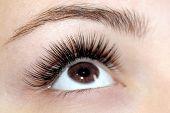 Eyelash Extension Procedure. Woman Eye With Long False Eyelashes. Close Up Macro Shot Of Fashion Eye poster