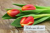 Welcome Home Card With Three Red And Yellow Tulips On Wooden Surface poster