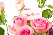 image of thank you card  - beautiful natural pink rose on white background - JPG