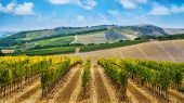 Vineyard Landscape In Tuscany, Italy. poster