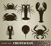image of crustacean  - crustacean set - JPG