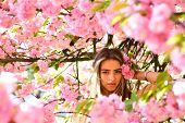 Spring Woman In Cherry Flower Bloom. Womens Day With Girl In Pink Cherry Blossom. Sakura Flower Beau poster