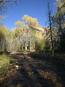image of cottonwood  - A small creek passes through a canyon where cottonwood trees are turning color - JPG