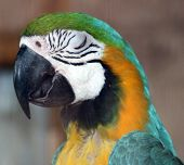 picture of polly  - parrot sleeping night watch memories just looking no way polly - JPG