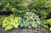 pic of molly  - Variety of Hostas Plants and Shrubs Along Garden Brick Path Walkway - JPG