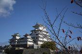 Beautiful White Himeji Castle In Autumn Season In Hyogo Prefecture, Japan. Himeji Castle Is The Larg poster