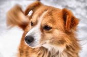 stock photo of realism  - Dog Drawing Realism - JPG