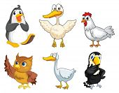 pic of nocturnal animal  - Illustration of the six different kinds of birds on a white background - JPG