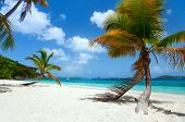 stock photo of virginity  - Beautiful tropical beach with palm trees - JPG