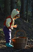 pic of face-fungus  - Little girl gathers mushrooms in the forest on summer day - JPG