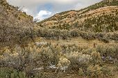 pic of sagebrush  - Old stone foundation overgrown with trees and brush in the ghost town of Standardville - JPG